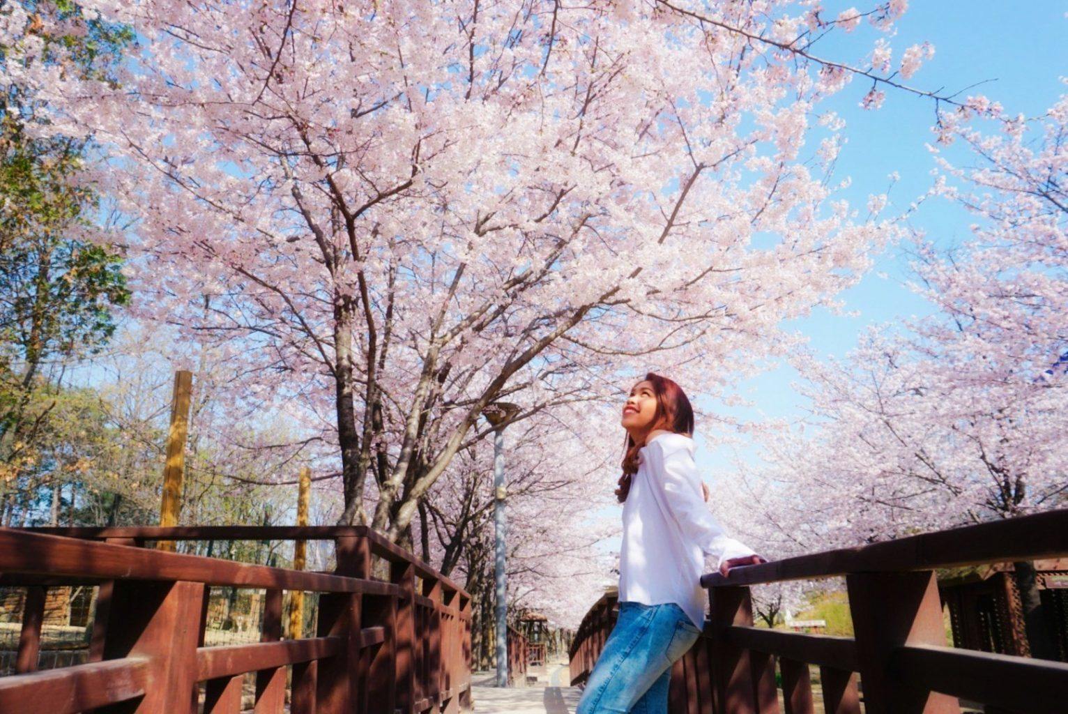 Best Places to See Cherry Blossoms in Seoul