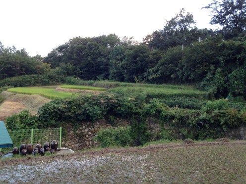 The Korean countryside.