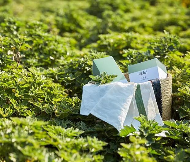 korean skincare clean ingredients mugwort hanyul