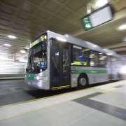 미라부카-커틴대간 버스 960 노선 운행 시작