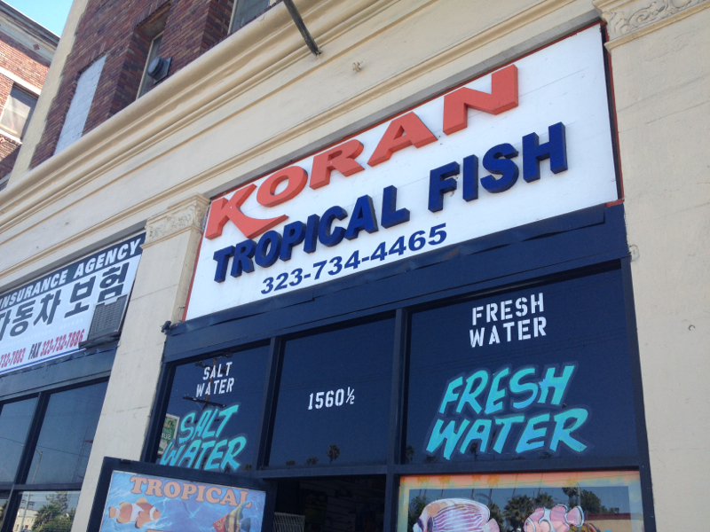 Korean Tropical Fish Store on Western