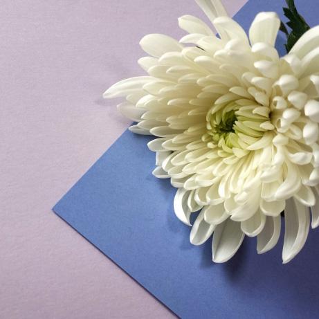 喪中で年賀状が出せない場合の結婚報告は?寒中見舞いで?喪中の範囲は?