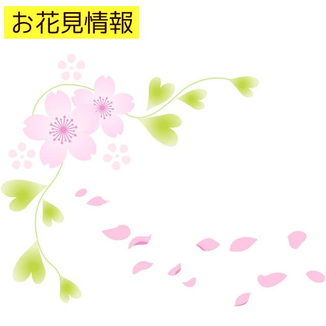 高田公園の桜の開花状況をライブカメラで!駐車場のおすすめや服装について
