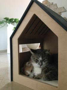 Modern cat and dog house