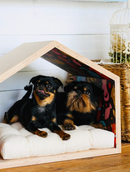Dog and cat house Woodstock Design
