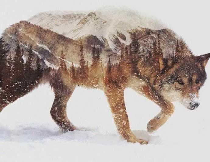 Чудовищным существом из сказаний инуитов.