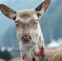 Первые случаи, когда олень становится хищником.