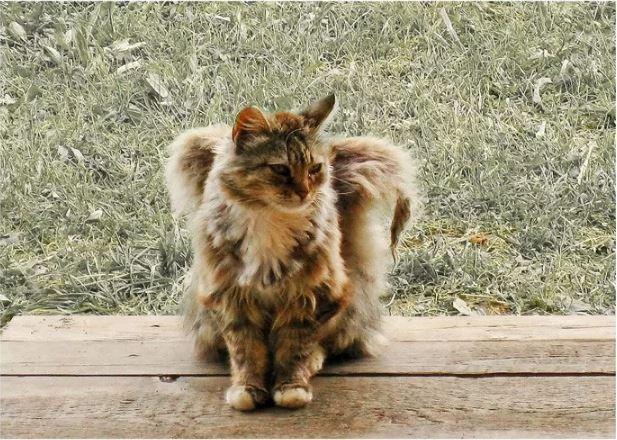 Крылатые кошки.