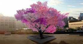 Волшебное дерево дает 40 разных видов фруктов