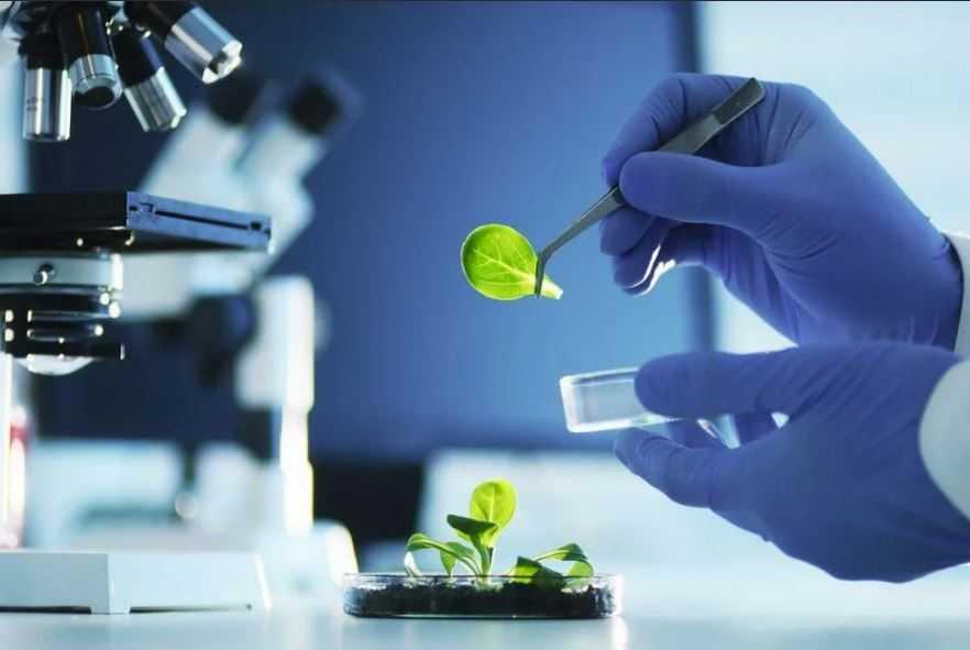 Биотехнология может помочь человечеству, но может сыграть и роковую роль.