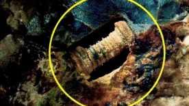 Найден винт возрастом 300 миллионов лет