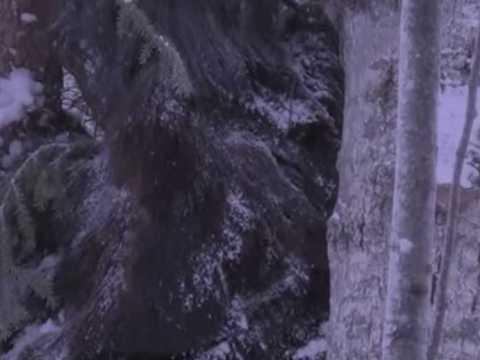В Канаде на камеру попал гигантский снежный человек.