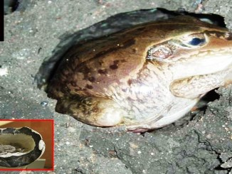 Living Toads Found Entombed In Stone?