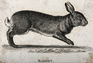 """""""A Waskely Wabbit"""" E. Fudd"""