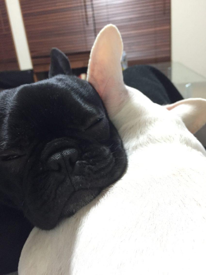 すずちゃんを枕にする風太