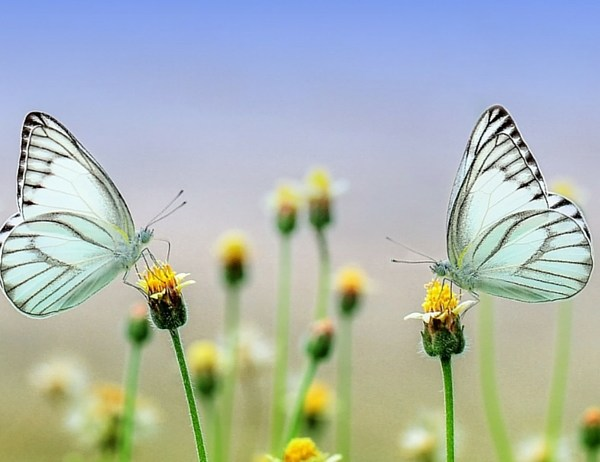 Coach a Butterfly