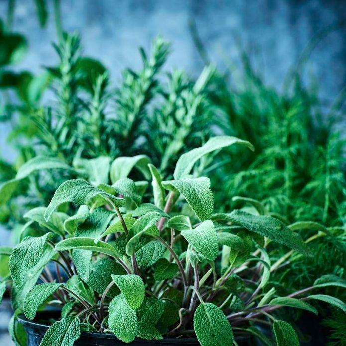 herb_garden_create_your_own