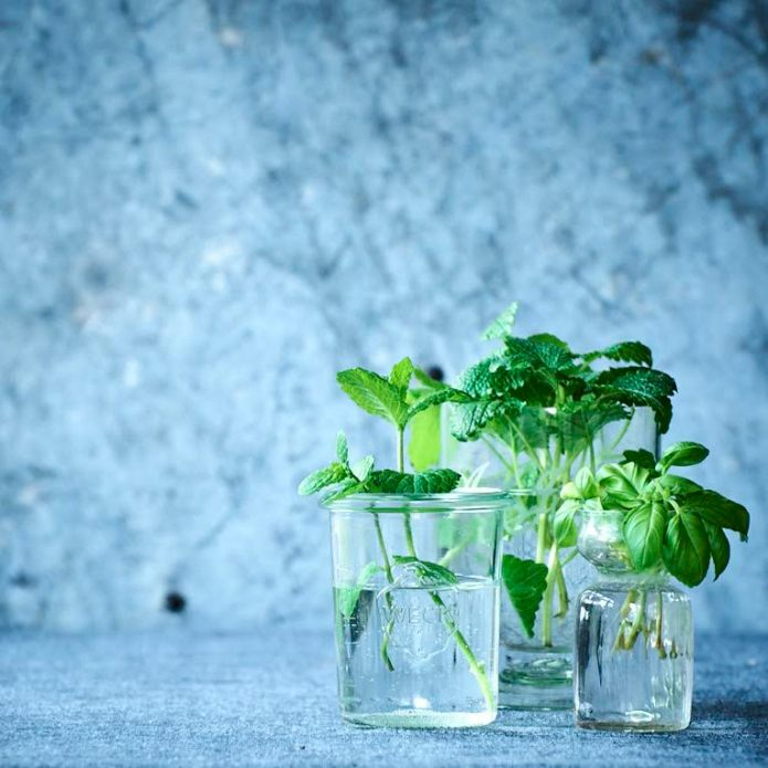 small_herbs_in_glass_vases