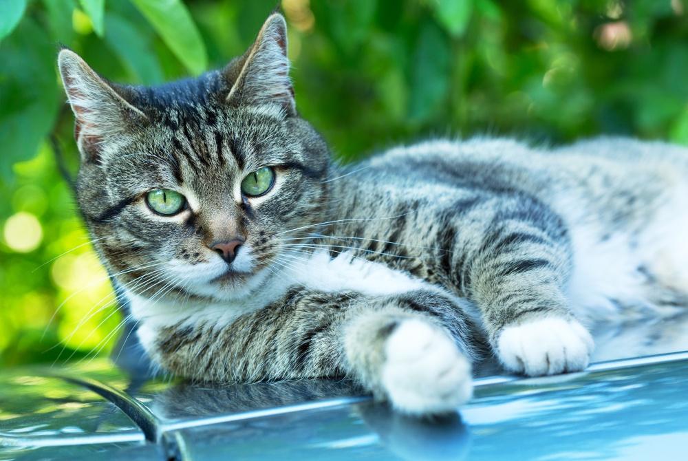 Пиелонефрит у кошки симптомы лечение и профилактика