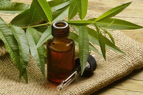 Olejek z drzewa herbacianego w kosmetyce