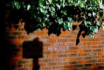 bricks_shadow_web