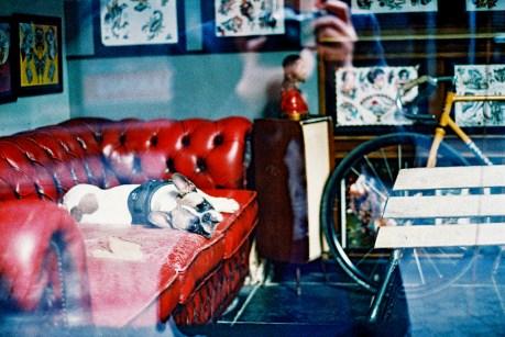 sofa_dog_web