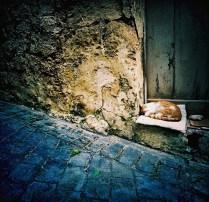 cat_snooze_web