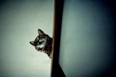 catperch_web