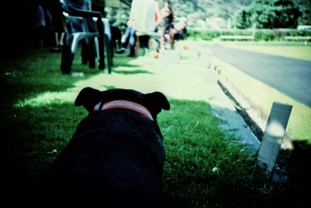 staffie_view_web
