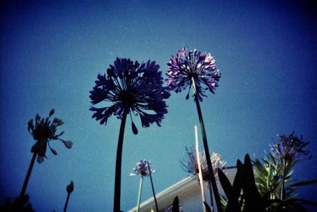 strange_flowers_web