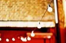 bulbs_web