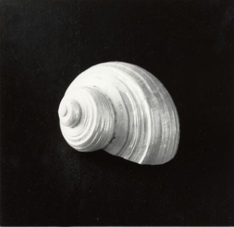 shell-15