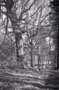 9Gevabox_woodland