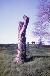 stump_web