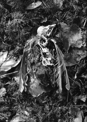 10. Bird skeleton