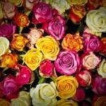 憧花ゆりの退団と『愛聖女』LV感想④「花になる」ことについて