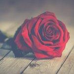 「皇帝と皇后」の夢の乖離とそれぞれの薔薇が象徴するもの『ONCE UPON A TIME IN AMERICA』感想①