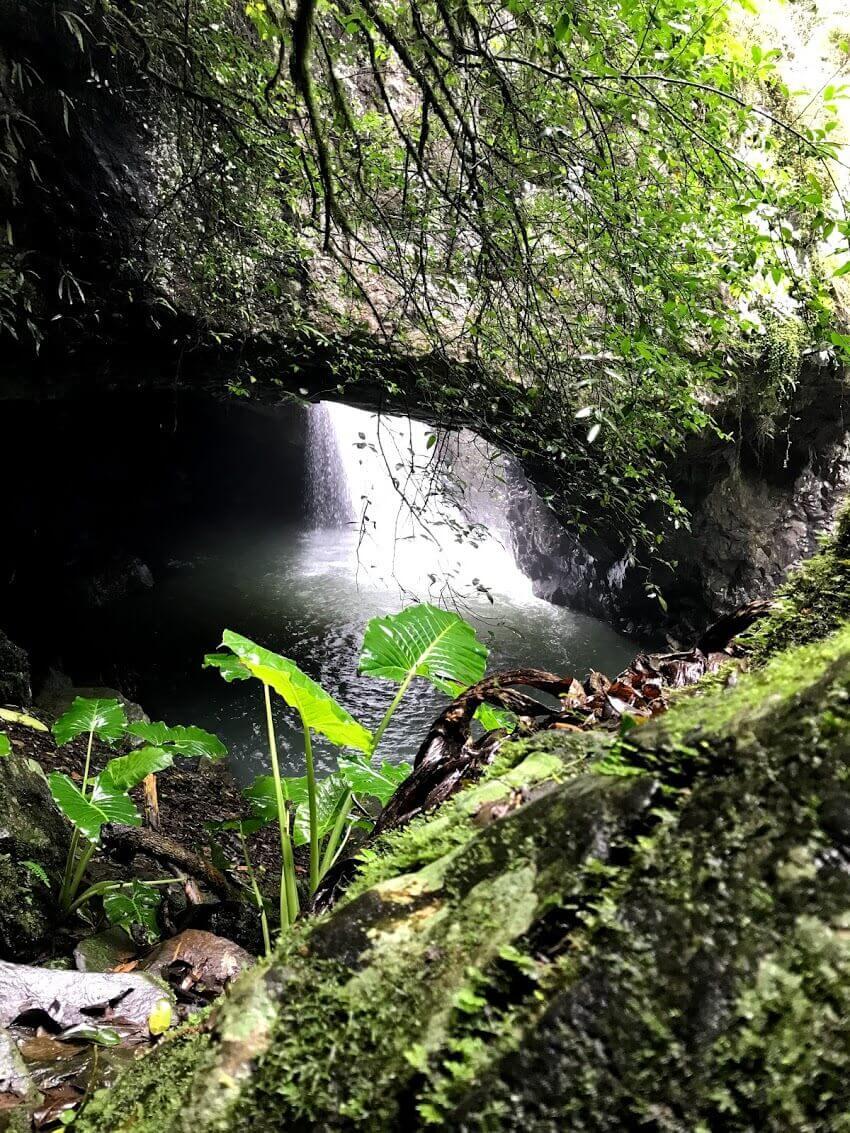 Springbrook にある Natural Bridge の滝の写真