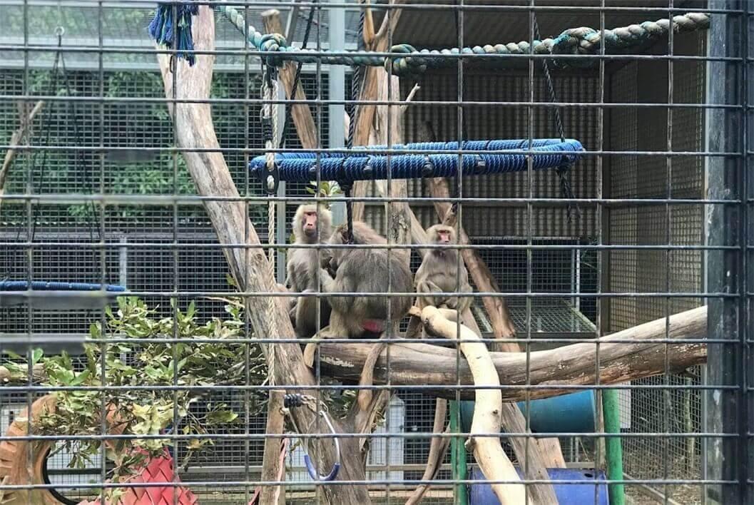 サンシャインコーストの人気動物園『HQ』の猿の写真