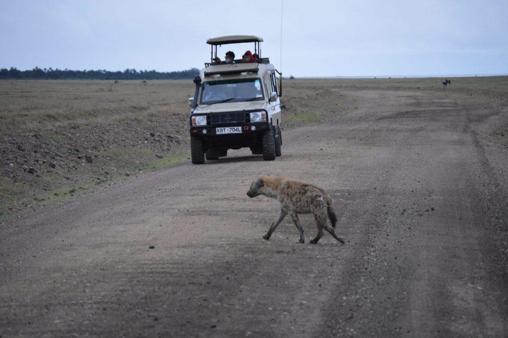safari company, Kenya