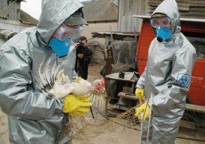 грипп птиц Кострома