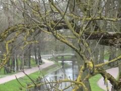 Drzewa w miescie 2017 KOSTROMA (70)