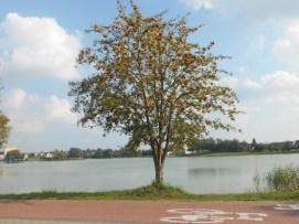 Drzewa w miescie 2017 KOSTROMA (75)