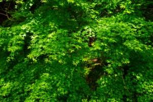 佐倉城址公園の紅葉