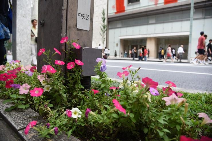 銀座の路上の花壇