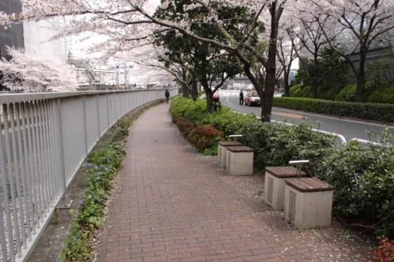 桜とお休み石