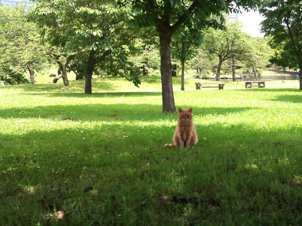 浜離宮恩賜庭園の猫