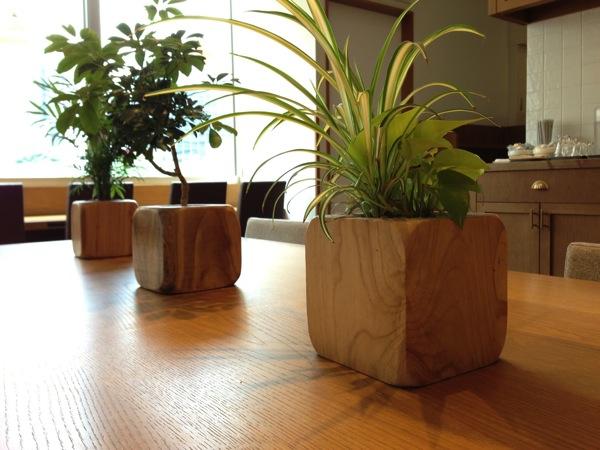 カフェソラーレ観葉植物