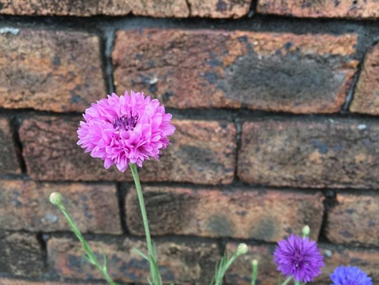 隅田川テラスの花壇