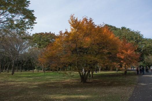 国営昭和記念公園の植物